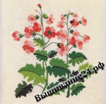 Схема вышивания крестом - Первоцвет китайский, цветы